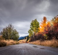 This backcountry road is the Moose-Wilson road, running south from Grand Teton NP to Wilson Wyoming.  I saw a cow elk and calf in tall grass near a stream, and a 6 x 6 bull elk while slowing driving along this road.