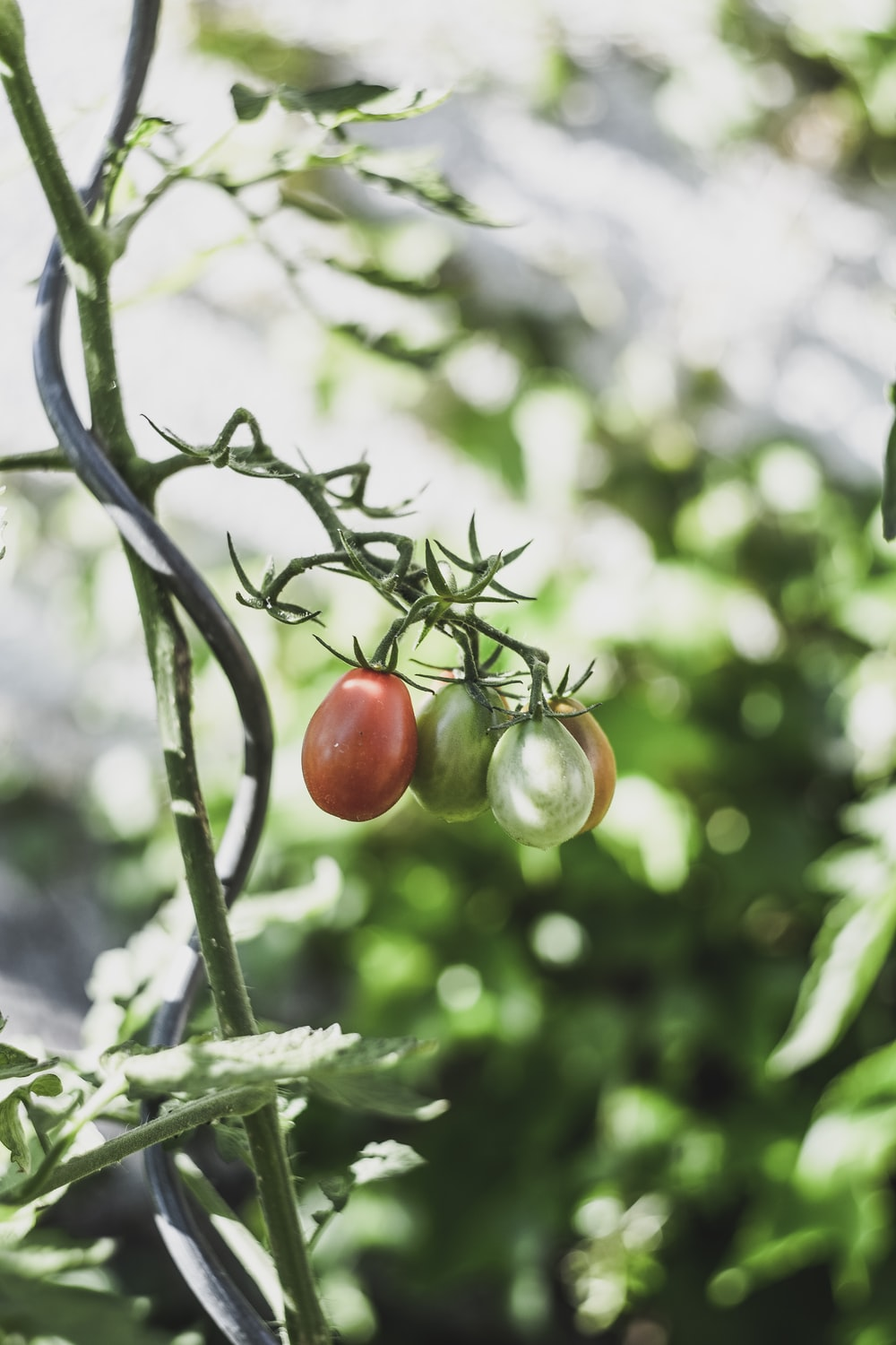 green and red fruits in shallow focus photography