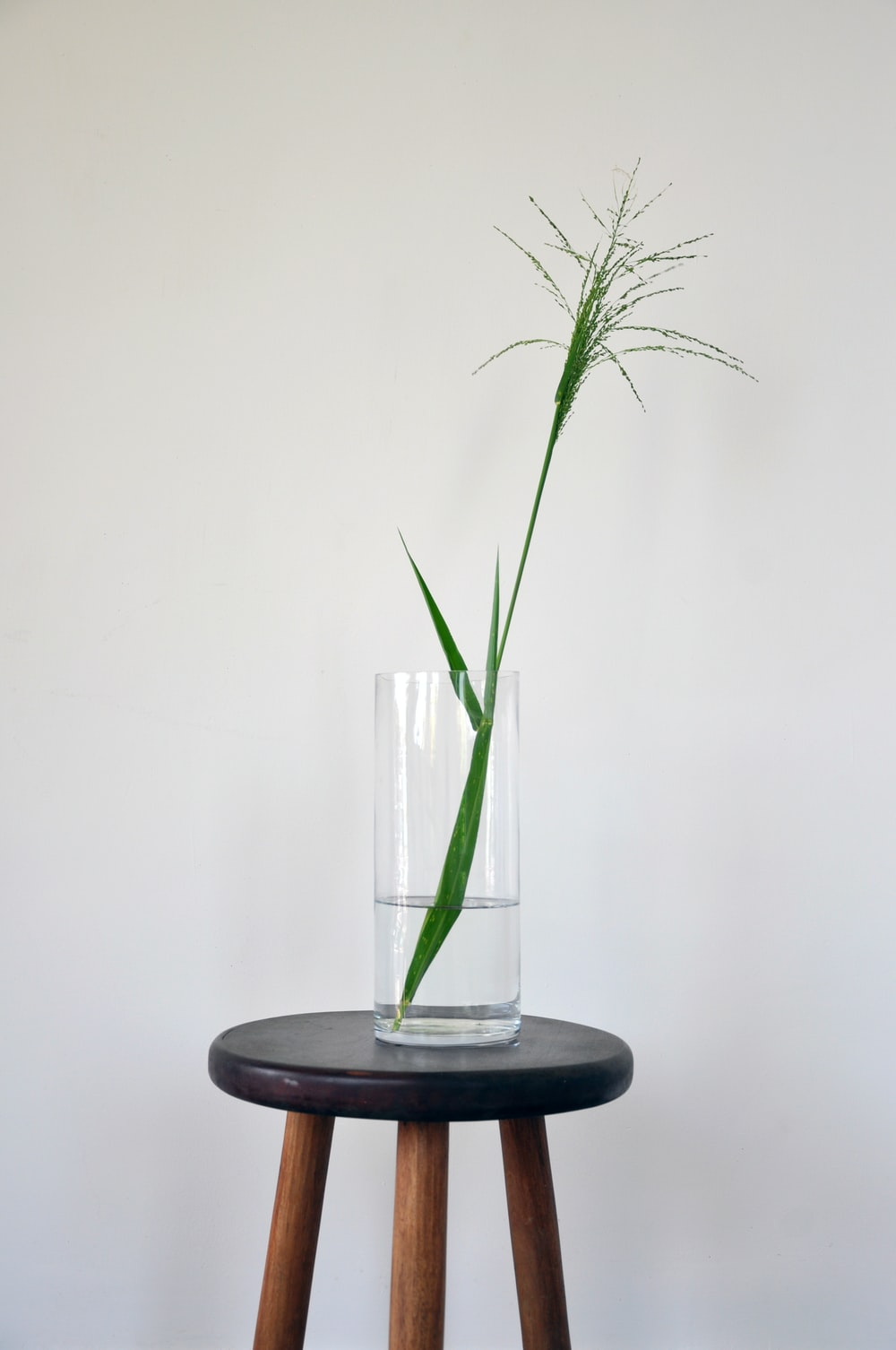 clear glass vase with green plant