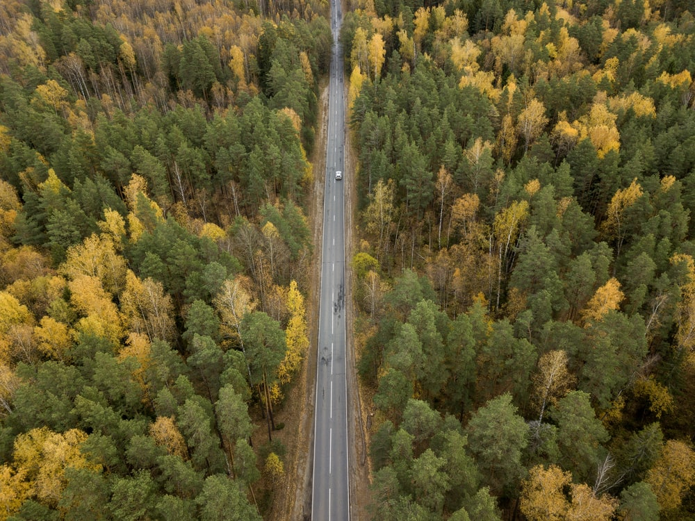 bird's-eye view photography of vehicle on road in forest