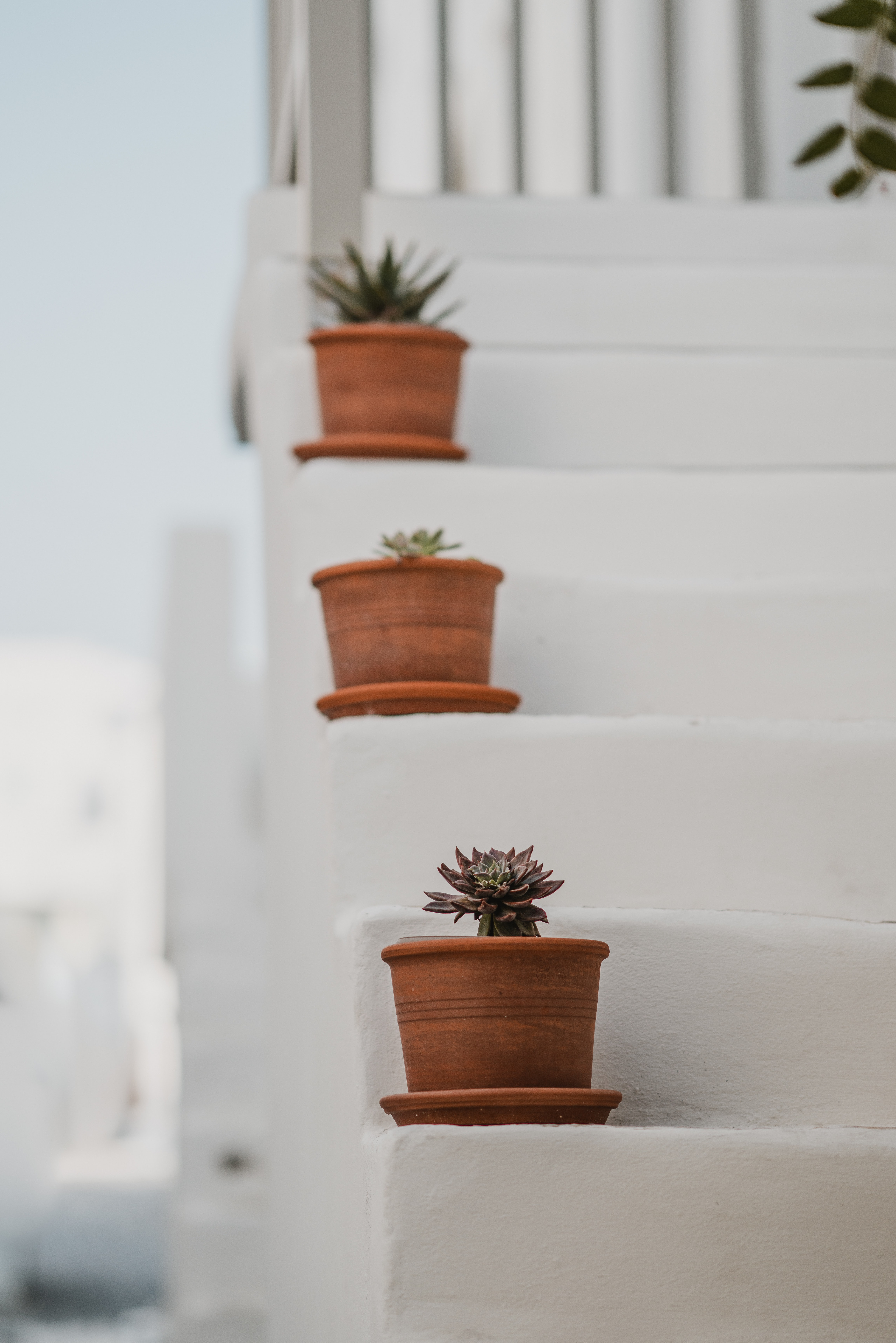 three succulents on white stairs