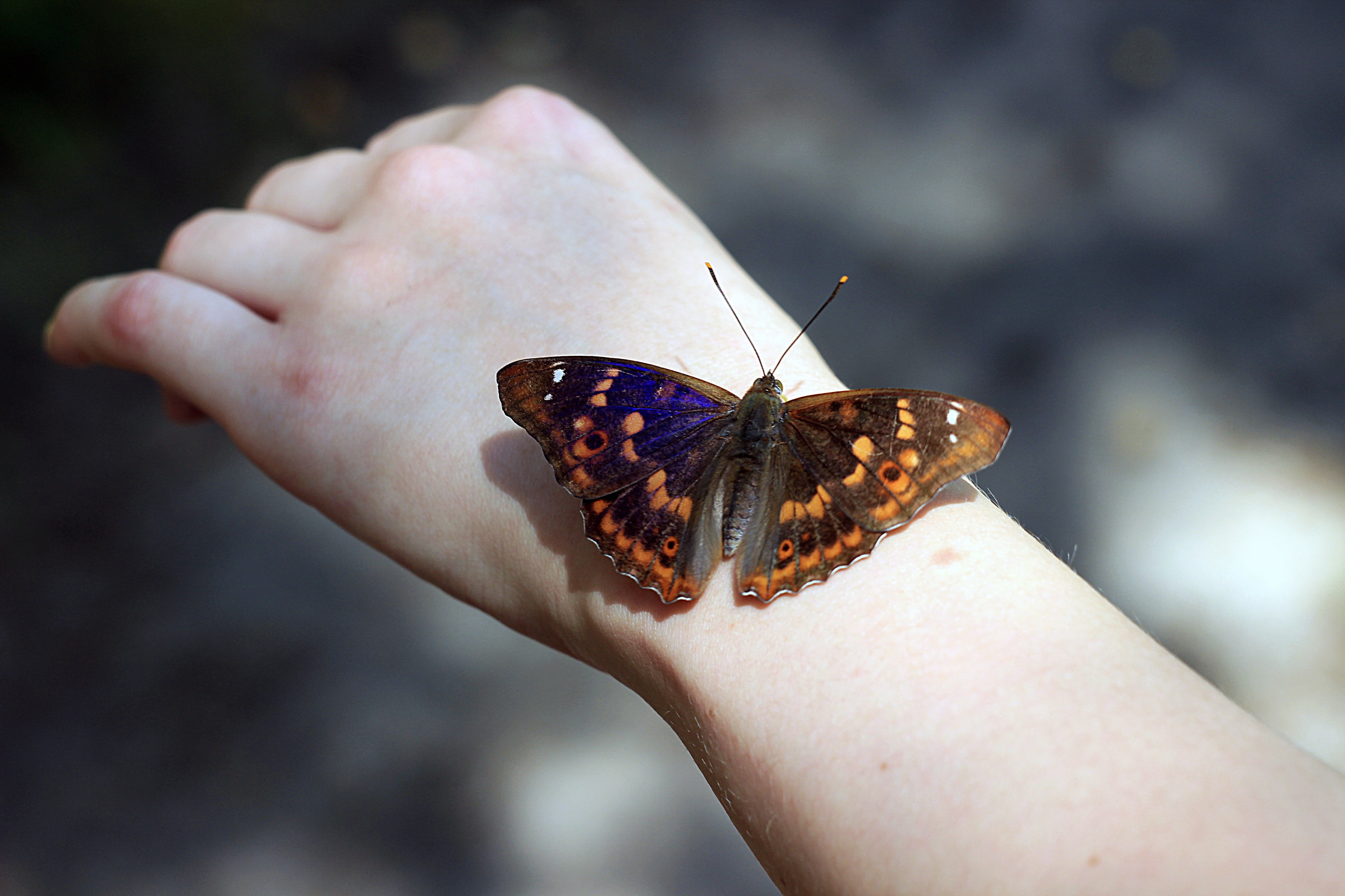 shallow focus photo of brown butterfly on person's hand