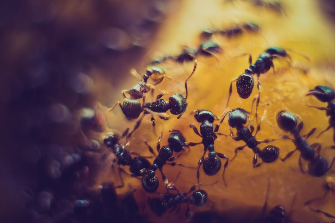 TYPES OF ANTS FOUND IN MICHIGAN