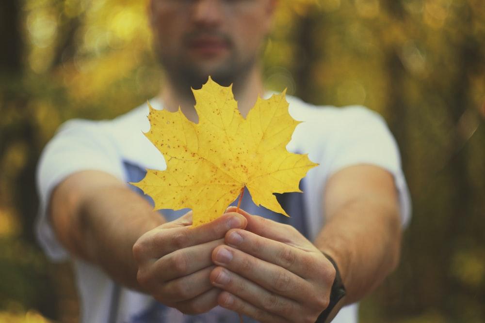 man holding yellow maple leaf
