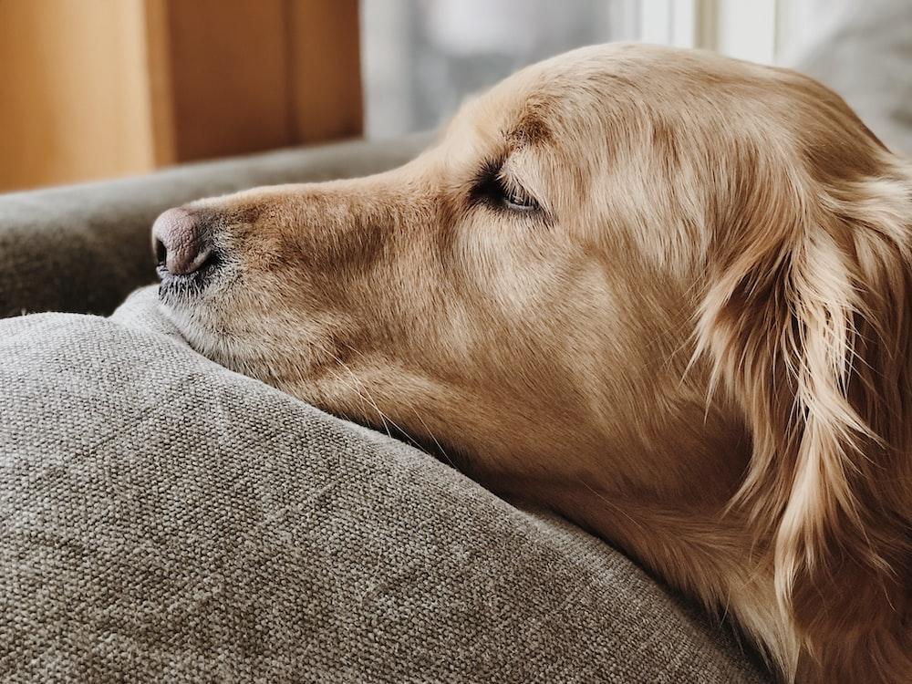 dog lying on brown fabric surface