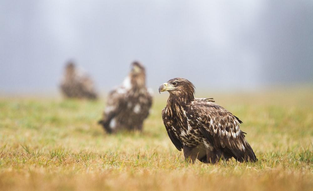 brown bird on grass