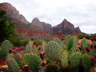kaktusy-i-gory