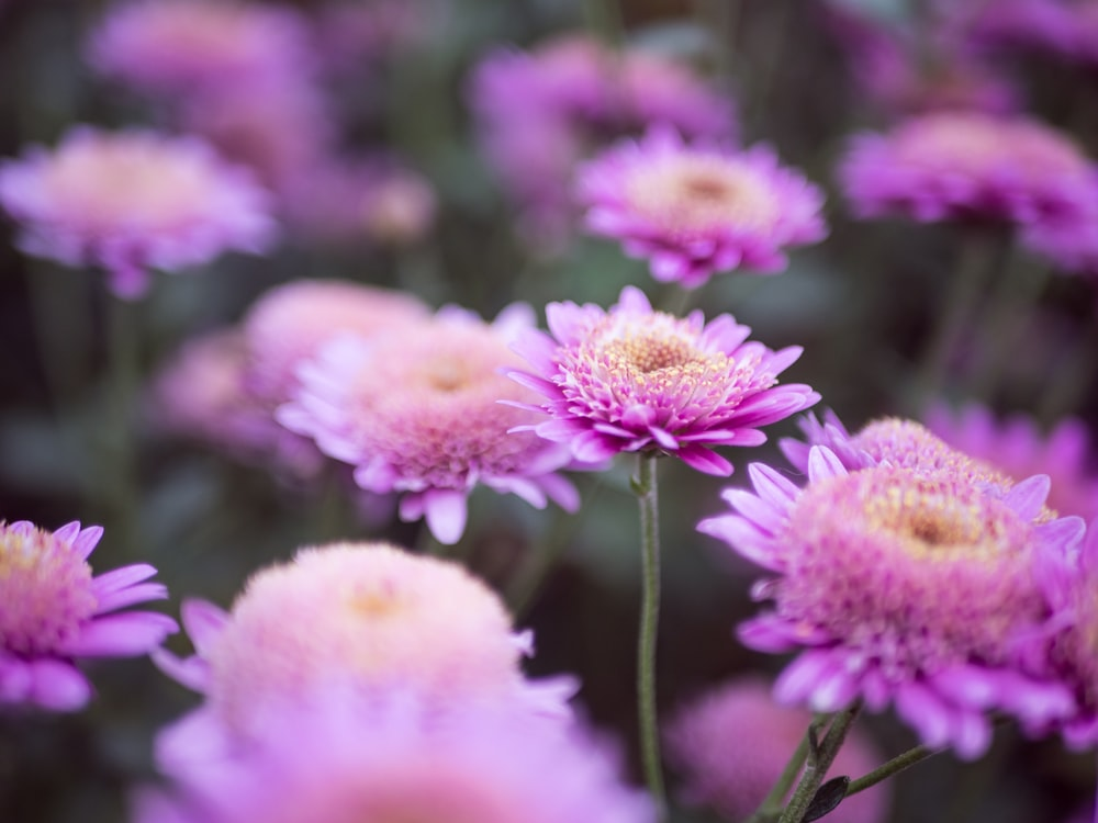 Purple flowers pictures download free images on unsplash selective focus photography of purple petaled flower mightylinksfo