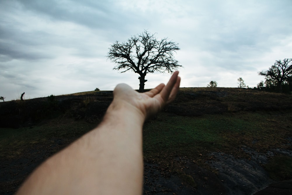 person pointing tree