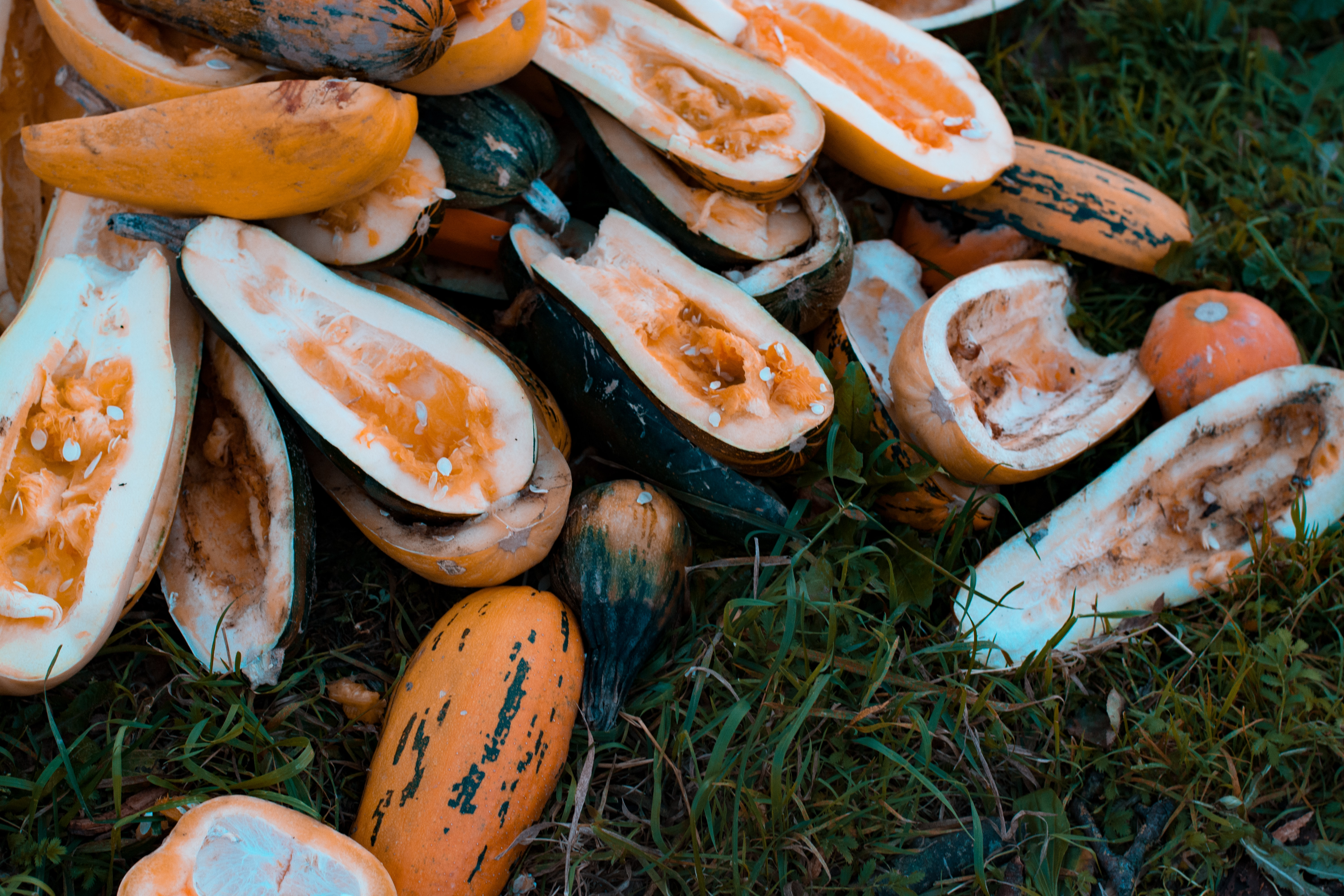 close-up photography of sliced pumpkins