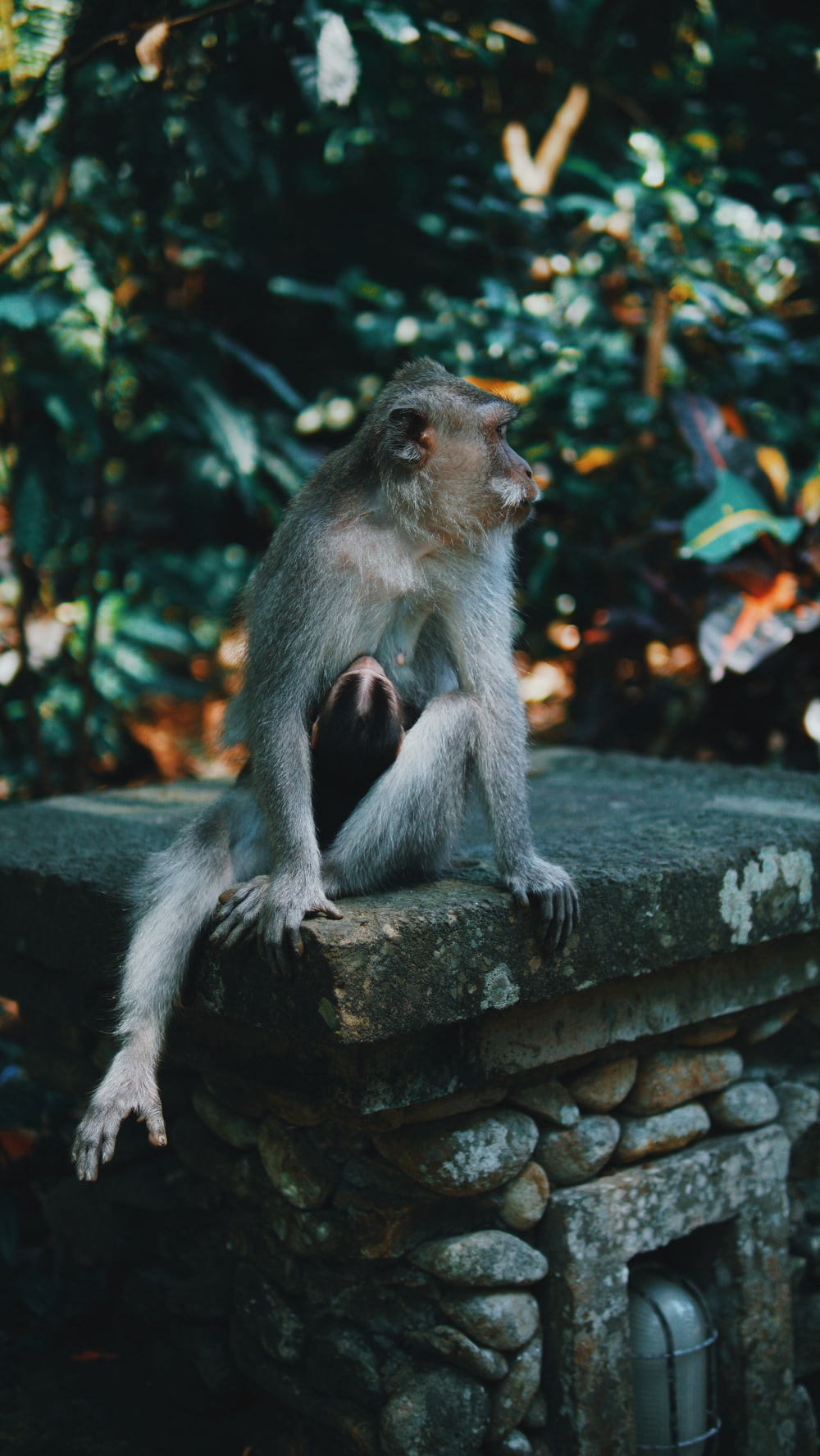 brown monkey sitting on pillar