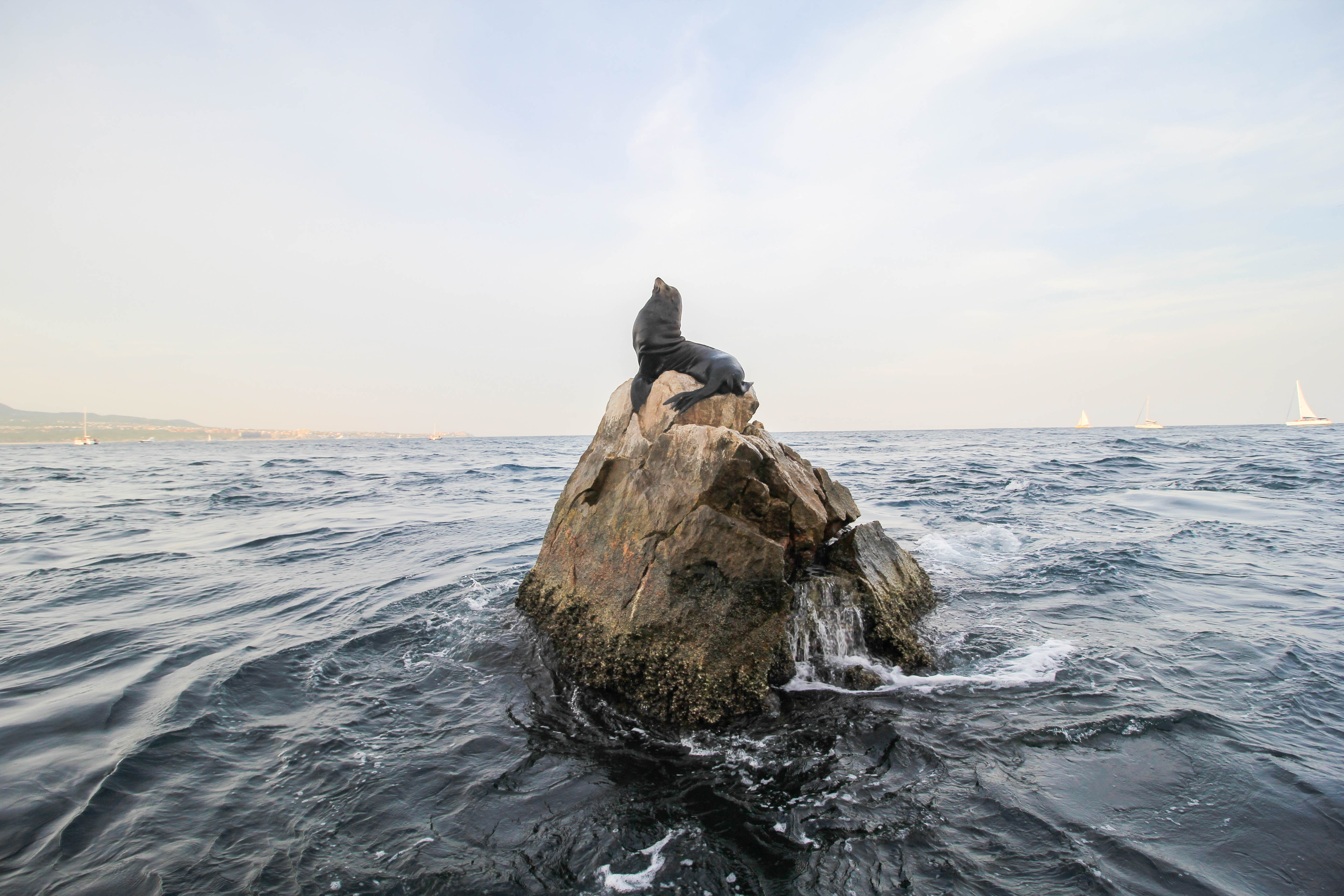seal on brown rock in the middle of sea