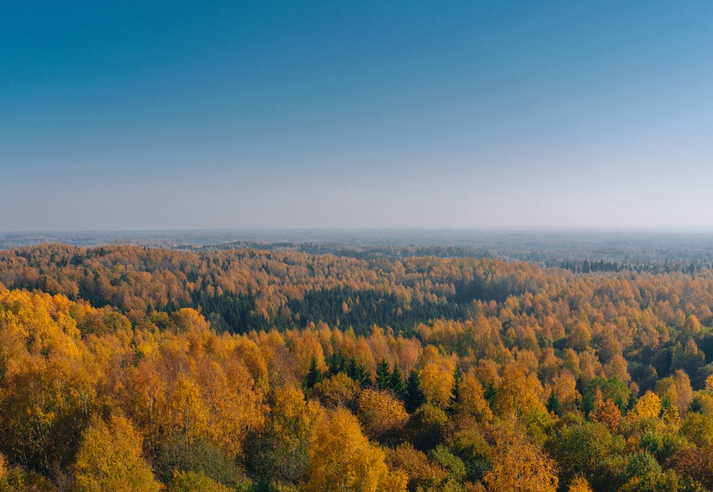 aerial photo of brown trees during daytime