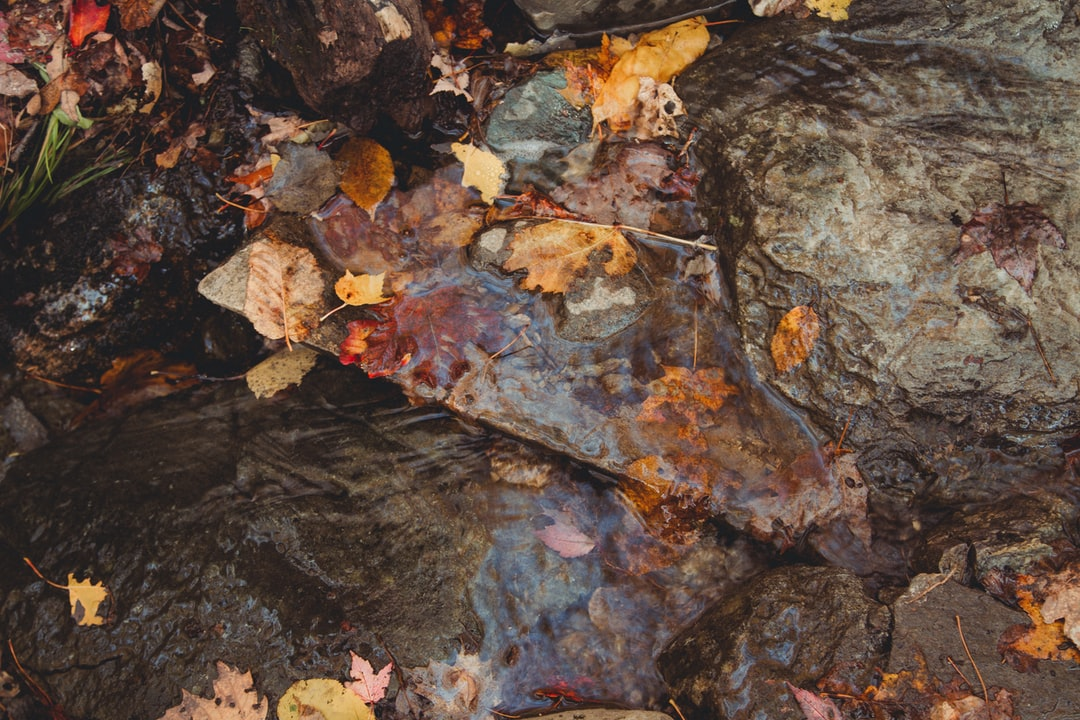 I took a close-up view of leaves fall in a small river. I thought this was a beautiful way to show how autumn arrived in Canada.