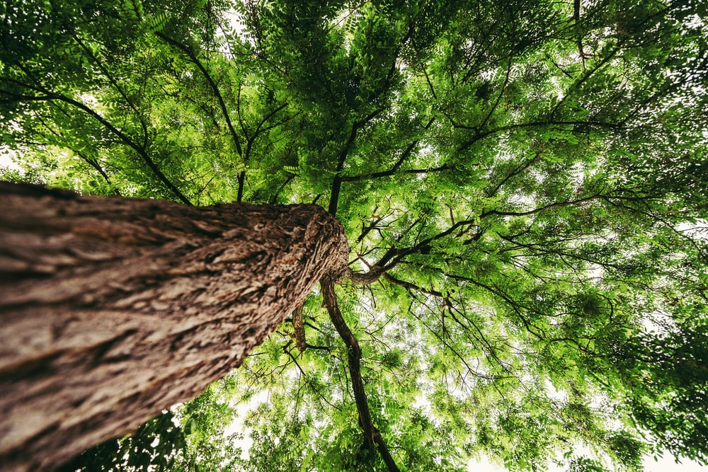 low-angle photography of green leafted tree