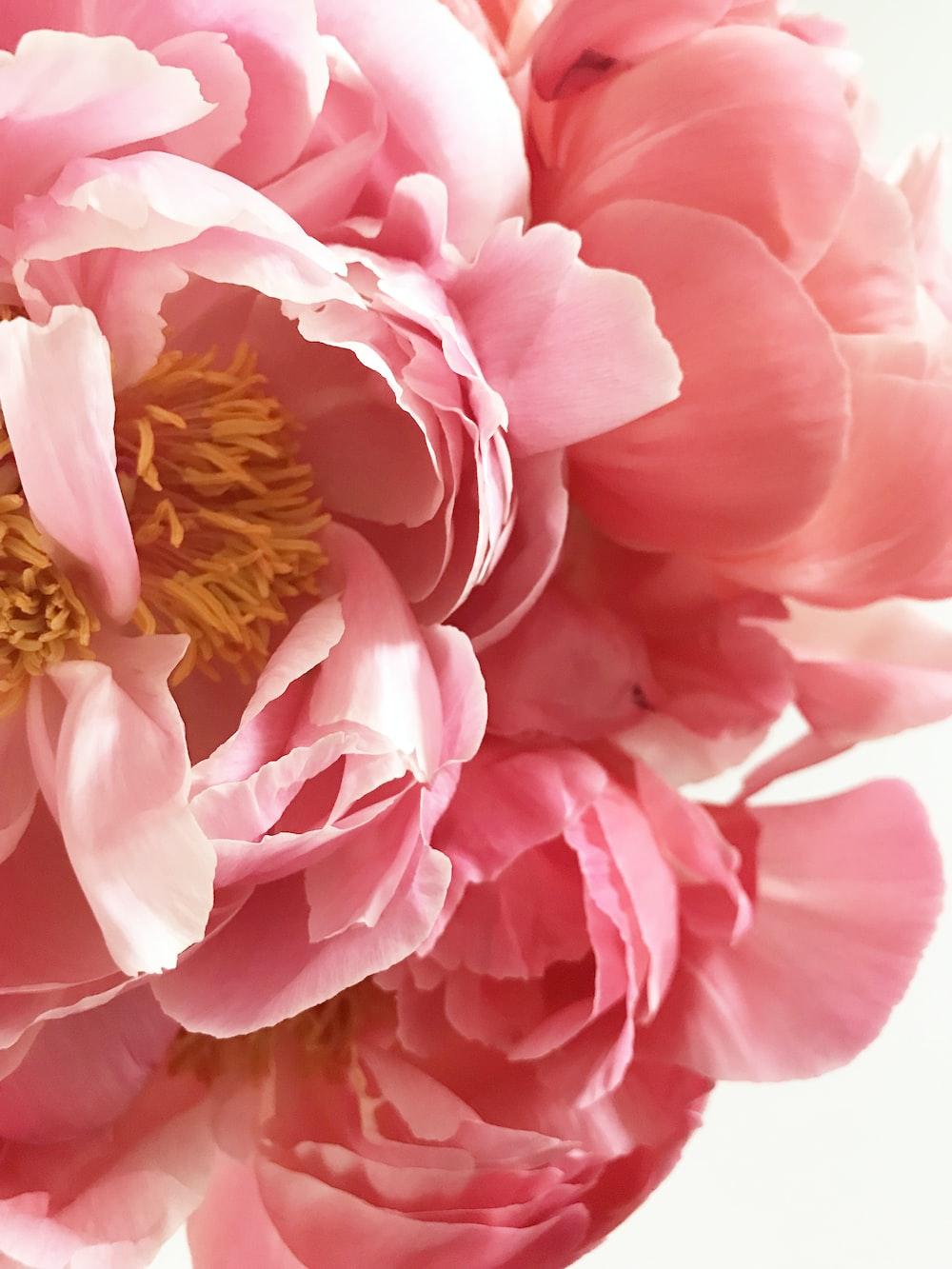 pink clustered-petal flower