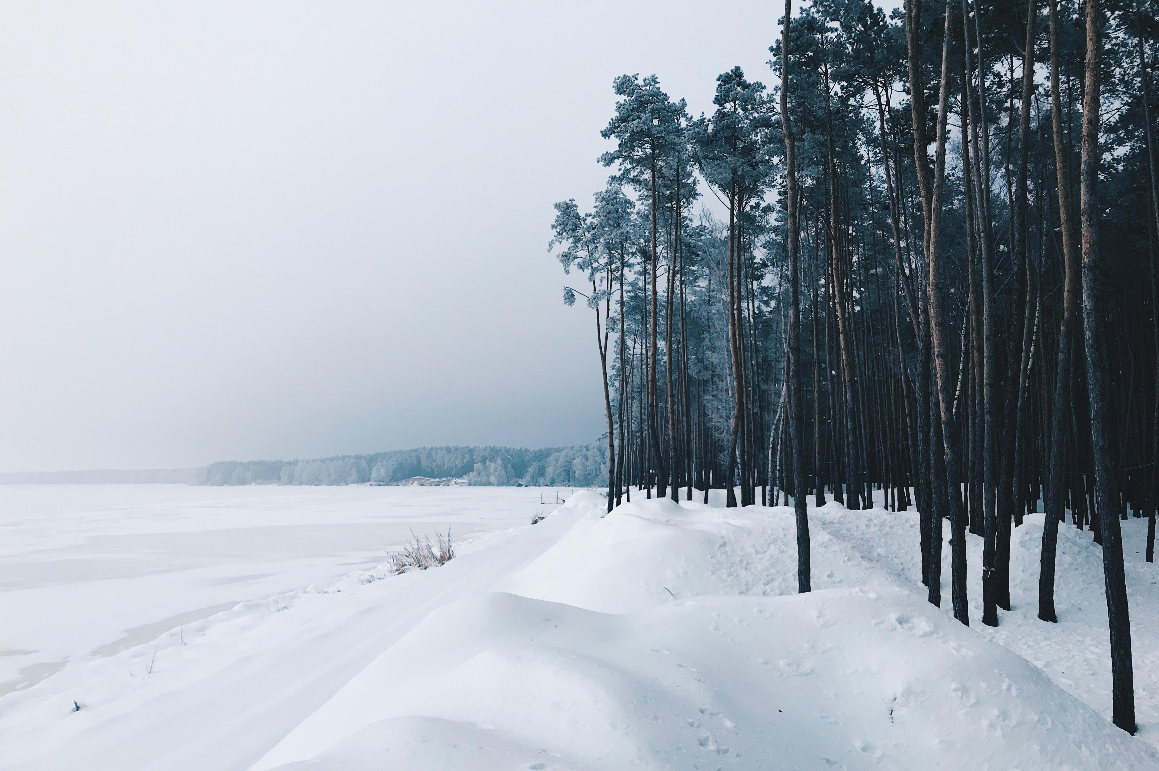 snowytrail during daytime