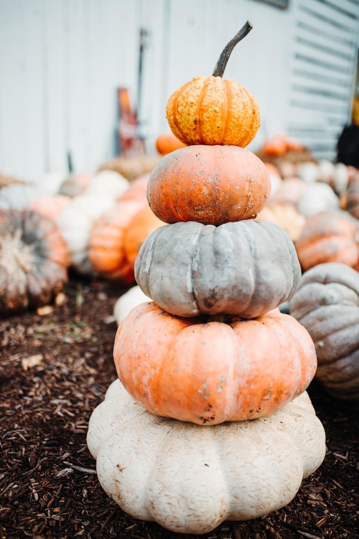 pumpkin vegetable lot