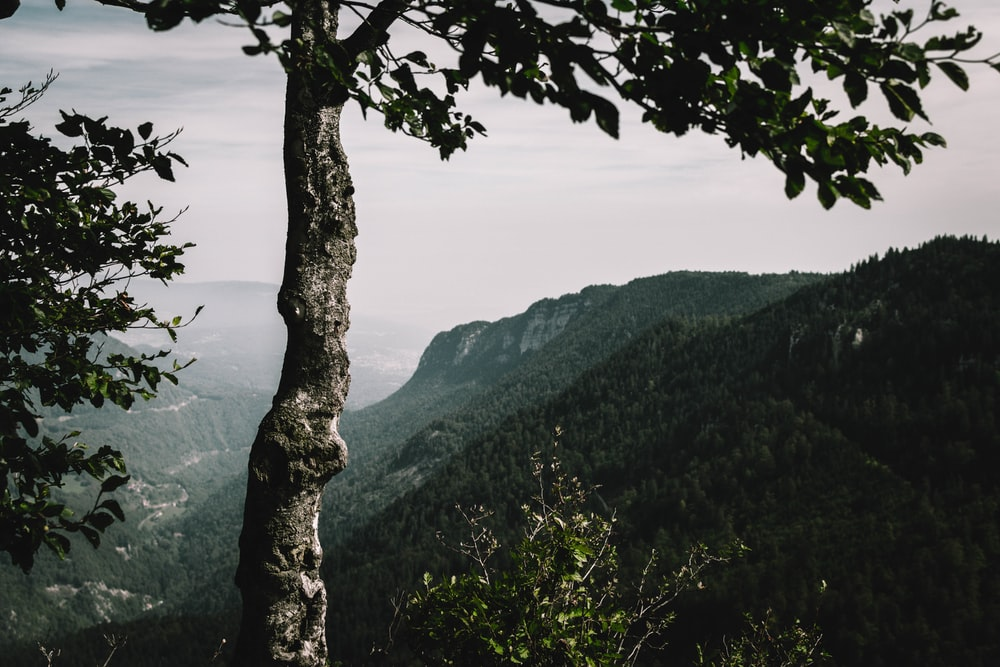 gray and green tree in mountain during daytime