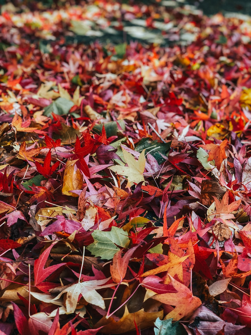 selective focus photography of maple leaves on ground