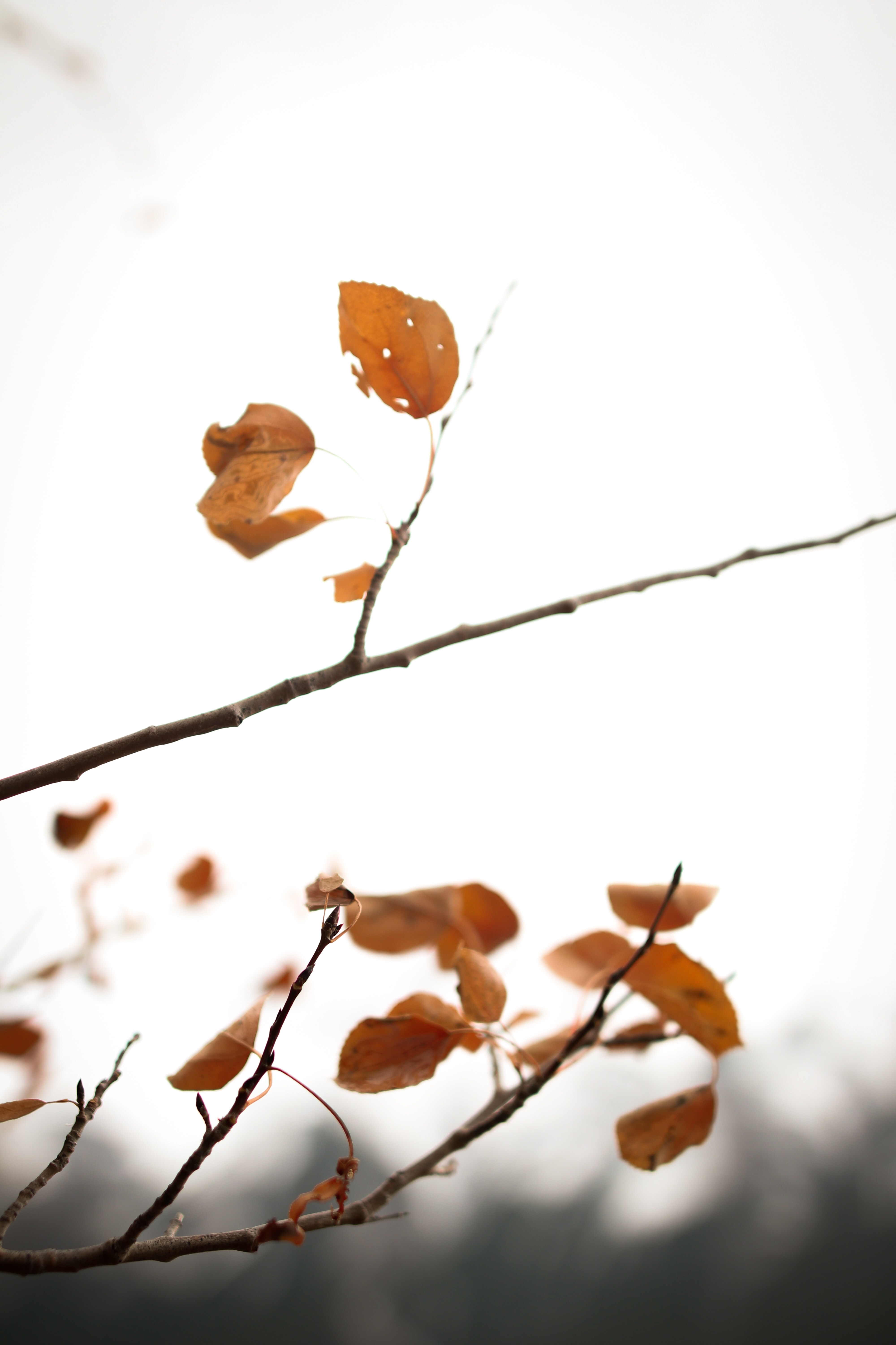 brown leaves during daytime