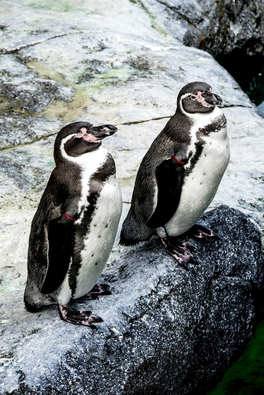 Penguins in Klaipeda
