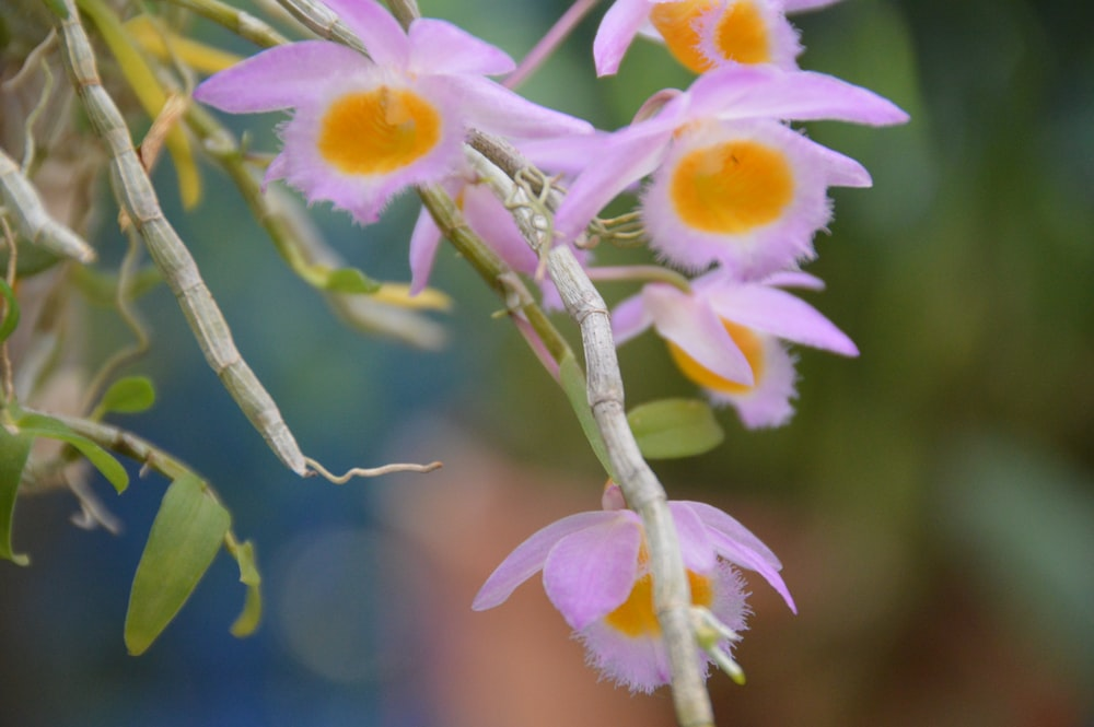 selective focus photography of pink and yellow flowers