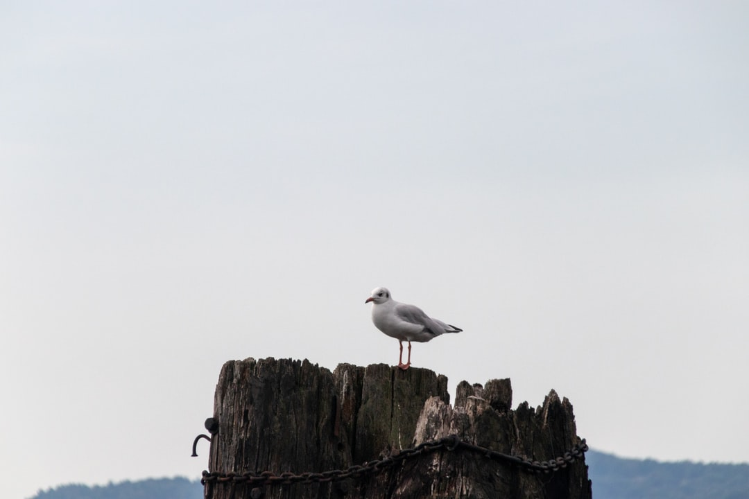 Seagull at Ferry Terminal