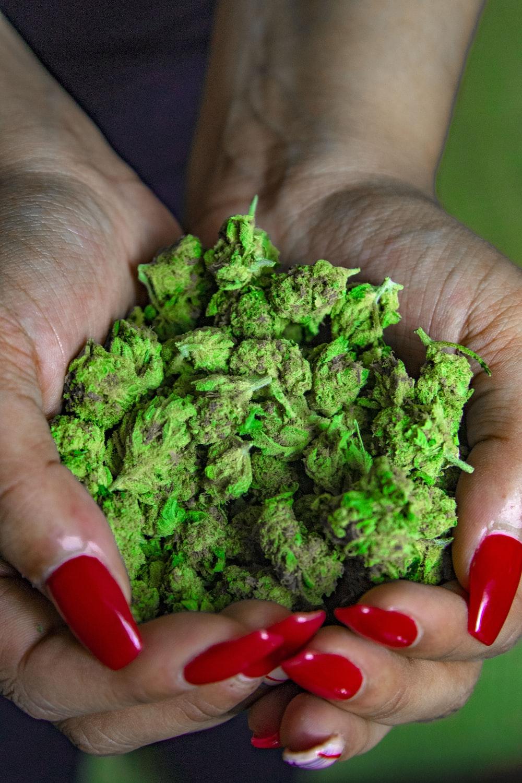 green kush on human hands