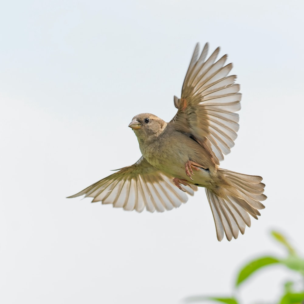 low-angle photography of brown bird