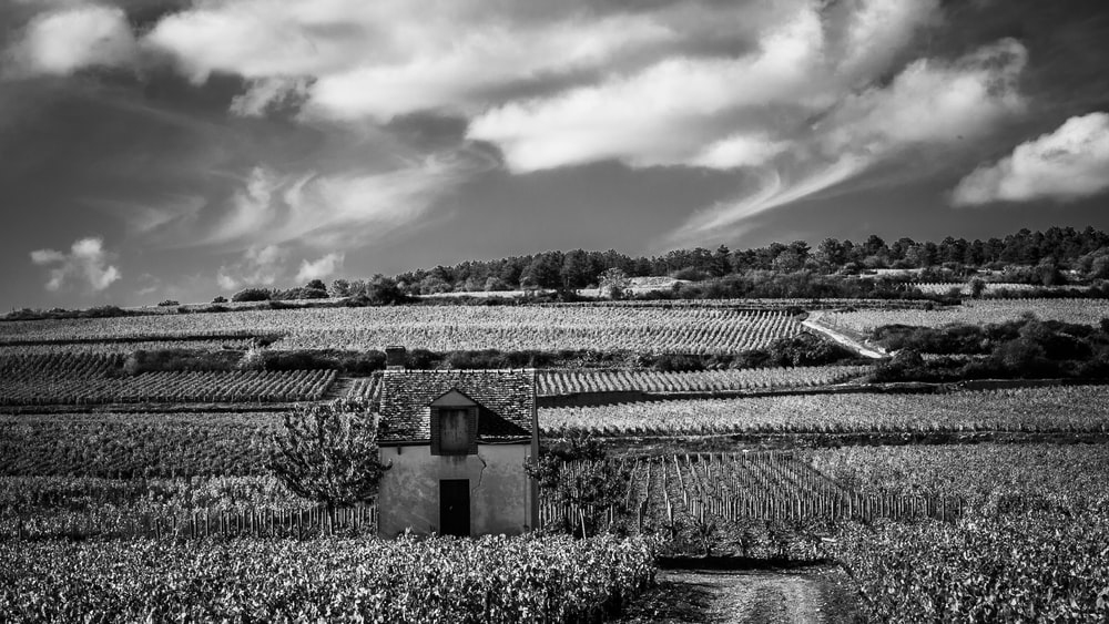 greyscale photography of house and field