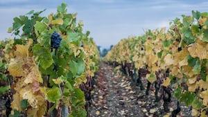 4672. Bor,szőlő, borászatok