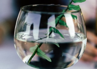 green herb in short-stem glass