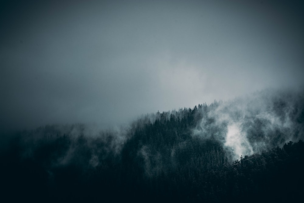 green trees with smoky mountain