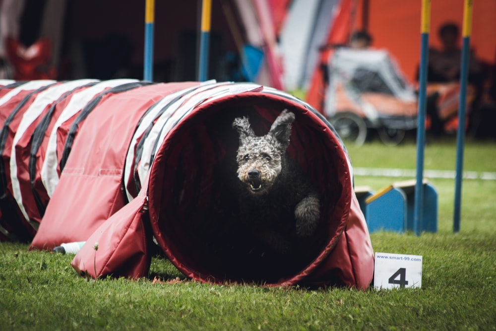 dog on play tunnel