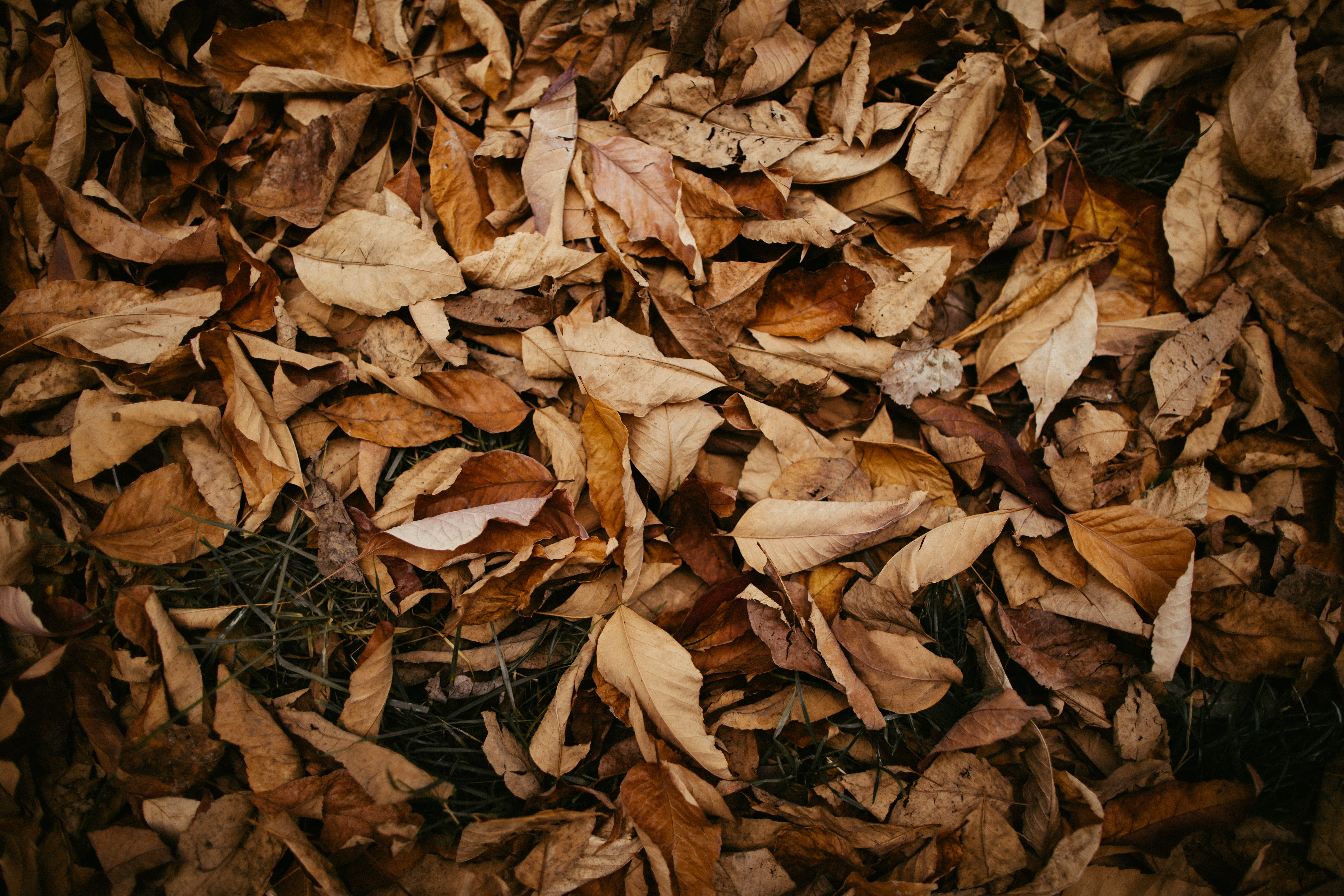 pile of brown wilted leaves