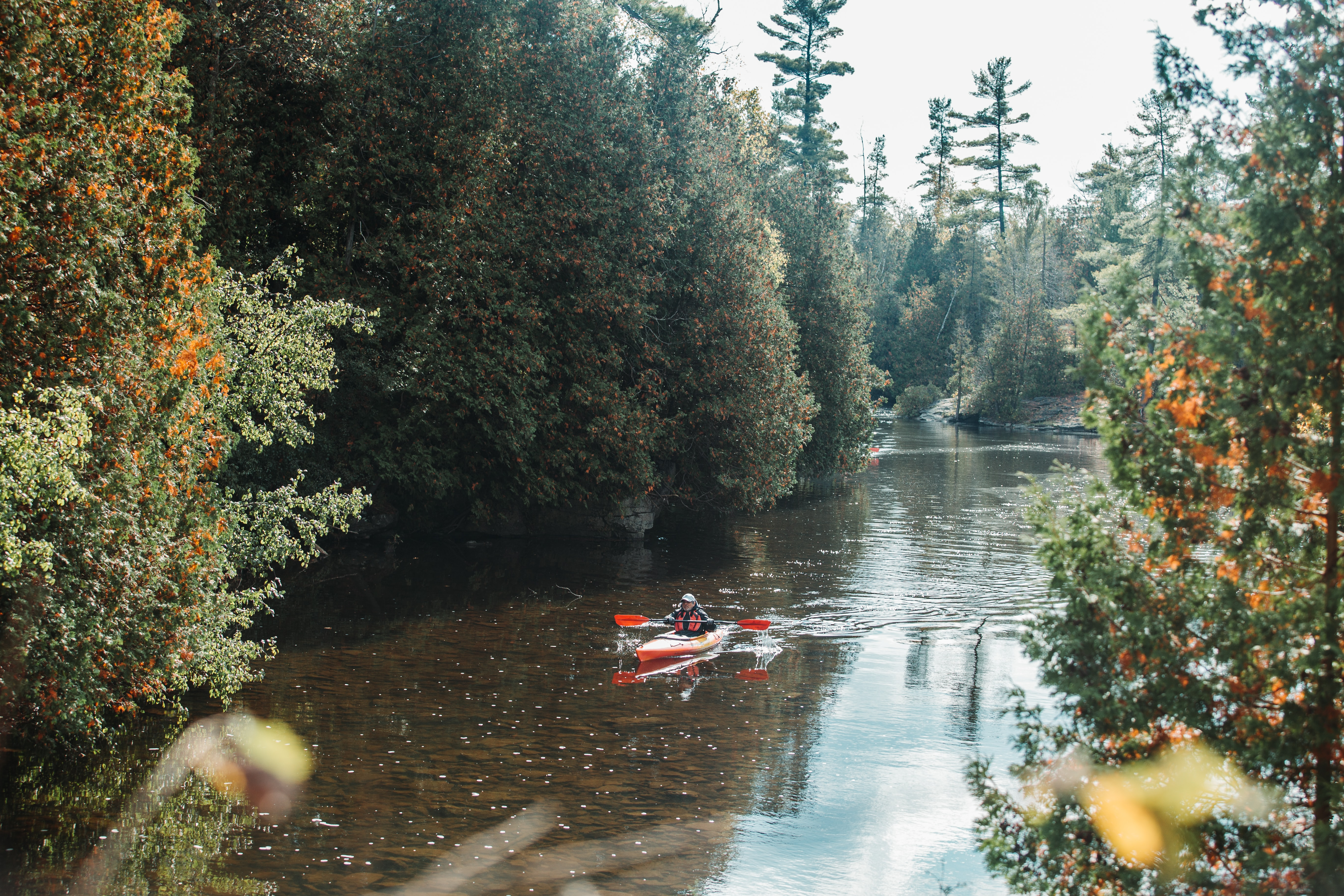 person kayaking on river near green leaf trees at daytime