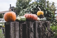 Pumpkins on a Fence
