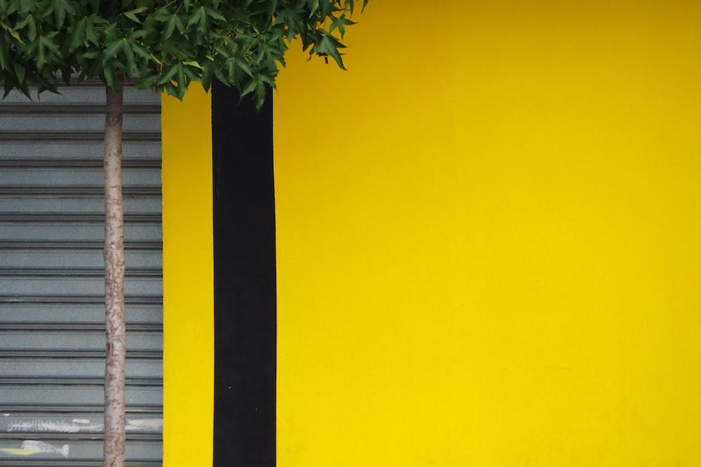green tree beside yellow building