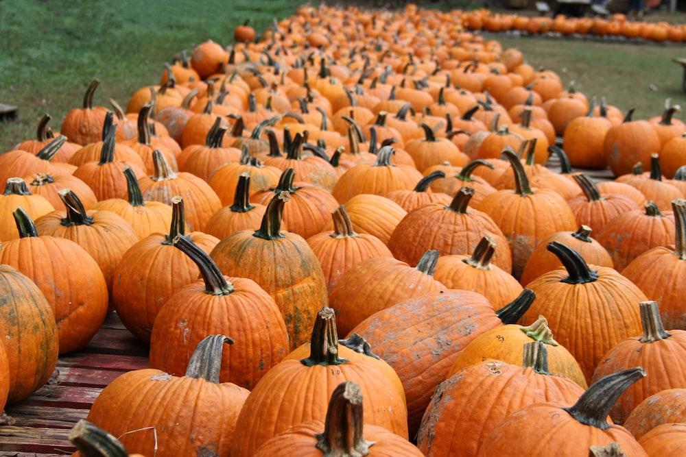 orange pumpkin patch