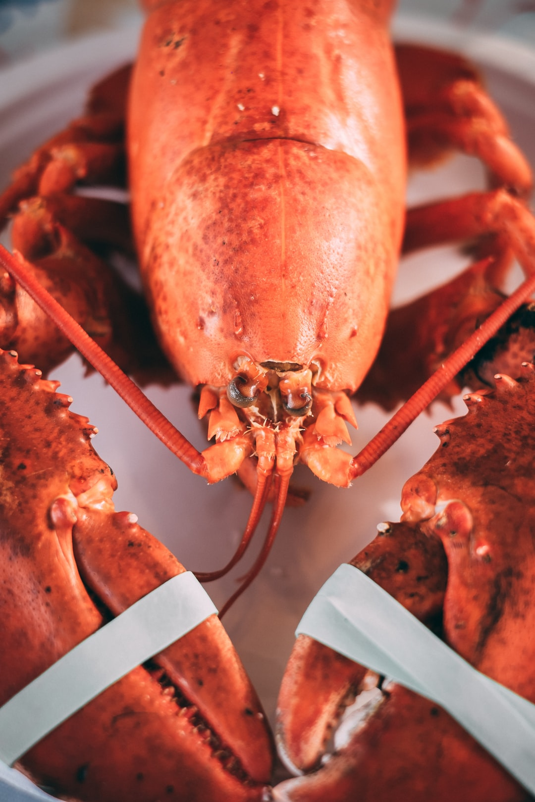 Maine Lobster Staple