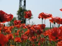 A story for remembrance day please read. war stories