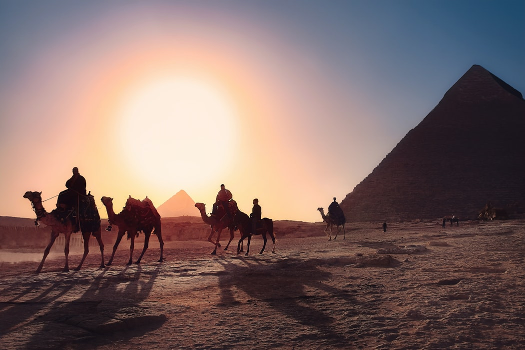 Camels walk in front of the pyramids at sunset
