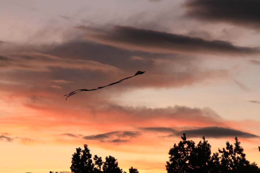 bird flying over the trees during sunset