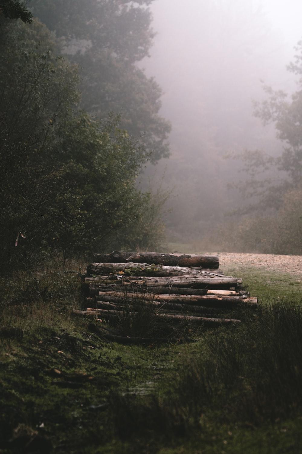 logs near trees