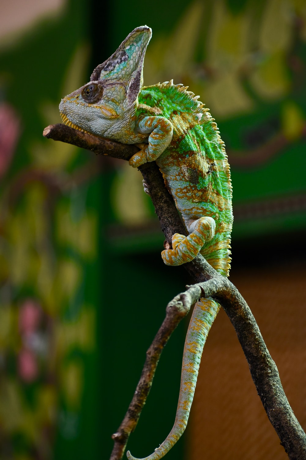 green and gray chameleon on tree branch