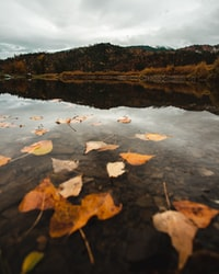 dried leaves on body of water under cloudy sky