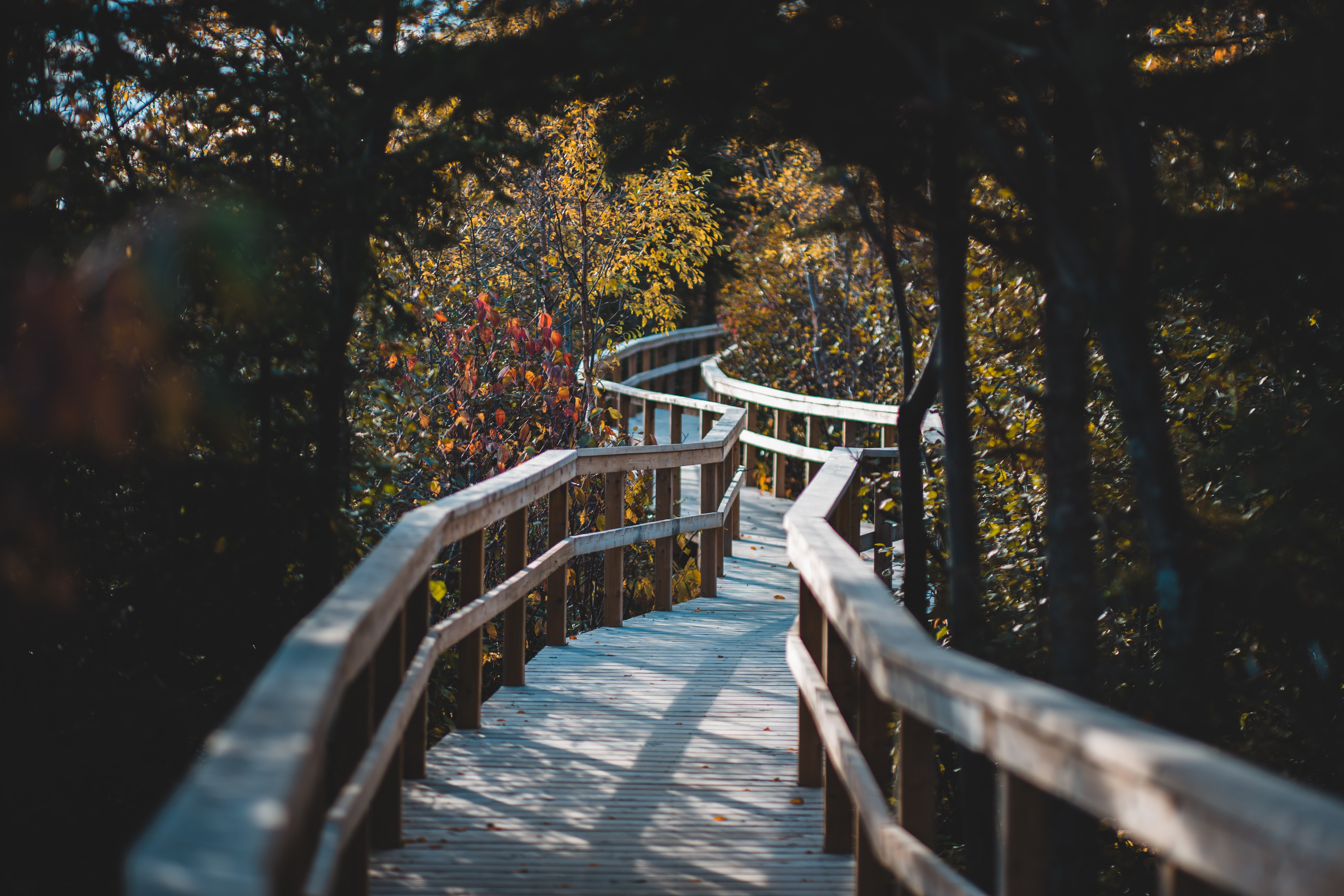 Path, tree, railing and forest HD photo by Erik Mclean