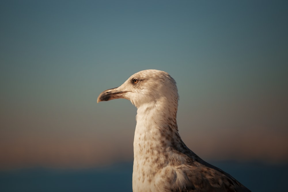 close-up photography of white bird at daytime