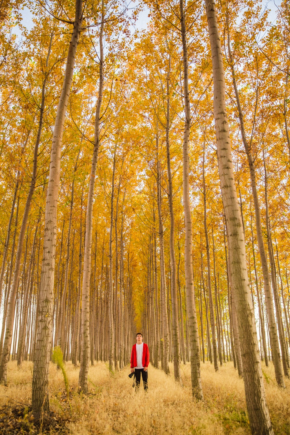 man standing in the middle of tall trees